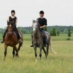 konie 153